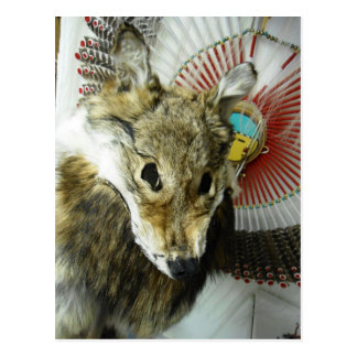 Coyote Headdress Postcard