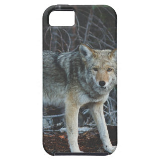 Coyote Hunting iPhone 5 Cases