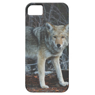 Coyote Hunting iPhone 5 Cover
