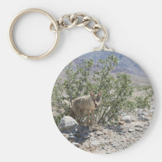 Coyote in Death Valley Desert Key Ring