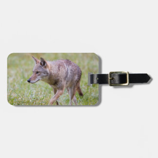 Coyote in field, Cades Cove Luggage Tag