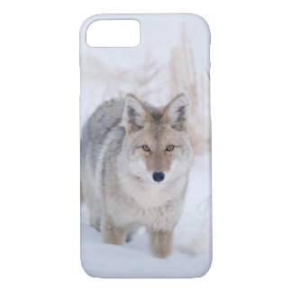 Coyote in Winter Wildlife iphone 8/7 Case