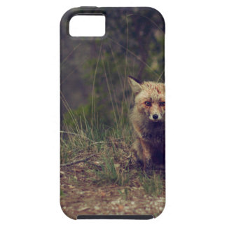 Coyote iPhone 5 Covers
