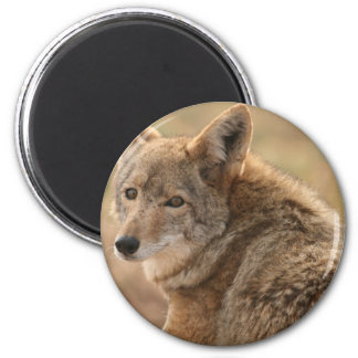 Coyote Magnet