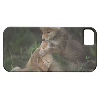 Coyote Puppies Wrestling (Canis Latrans) Case For The iPhone 5
