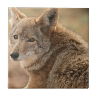 Coyote Tile