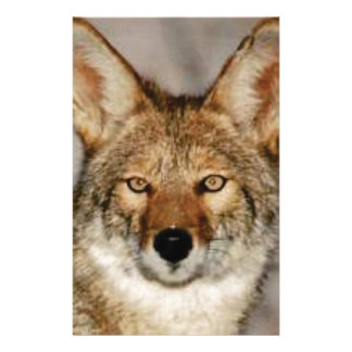 coyote up close stationery