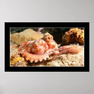 Cozumel - Octopus #4 - 11-2009 Poster