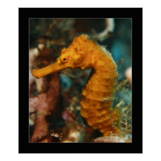 Cozumel - Orange Seahorse#2 Poster