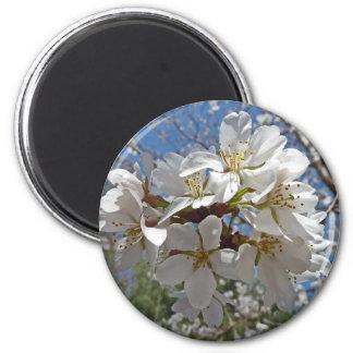 CR- Cherry Blossom Magnet