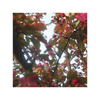 Crab Apple Blossom Canvas Picture Canvas Print