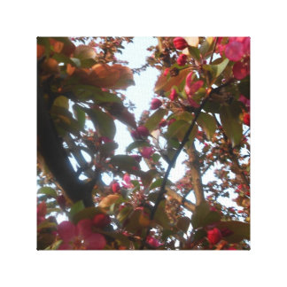 Crab Apple Blossom Canvas Picture Canvas Prints