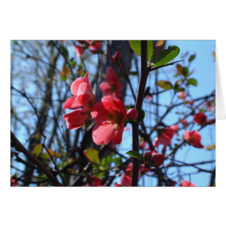 Crab Apple Blossom Card