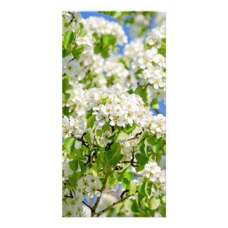 Crab apple blossom personalized photo card