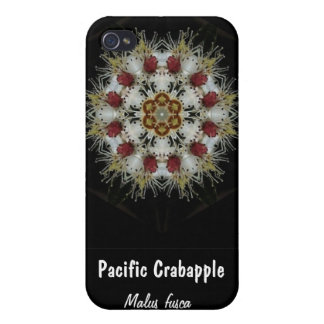 Crab Apple Blossoms, Pacific Crabapple, Malus f... iPhone 4 Cases