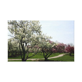 Crab Apple Trees in Spring Canvas Prints