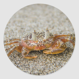 Crab claws classic round sticker