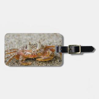 Crab claws luggage tag