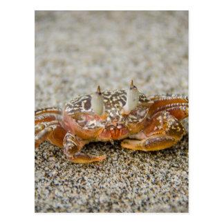 Crab claws postcard