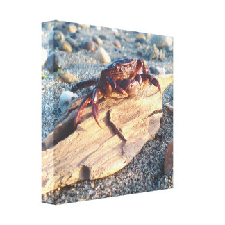 Crab on Driftwood Canvas Print