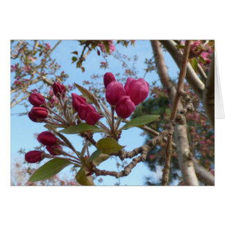 Crabapple Blooms Red Card