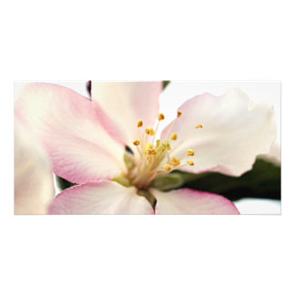 Crabapple Blossom Photo Greeting Card