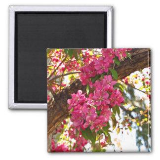 Crabapple Blossoms Magnet