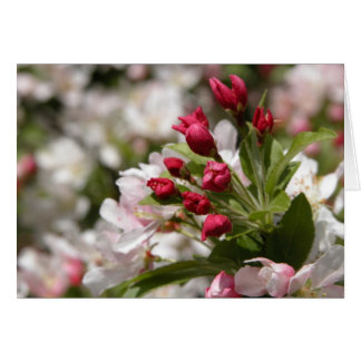 Crabapple Buds Card