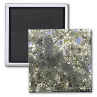 Crabapple Tree Blossoms Magnet