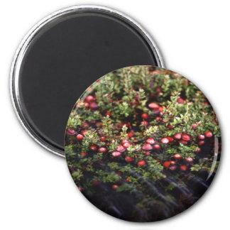 Cranberry Bog Magnet