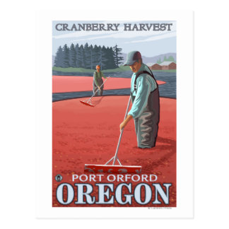 Cranberry Bogs Harvest - Port Orford, Oregon Postcard