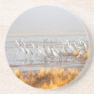 Cranes at dusk sandstone coaster