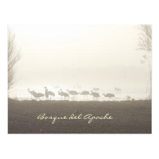 Cranes in the mist Bosque del Apache Postcard