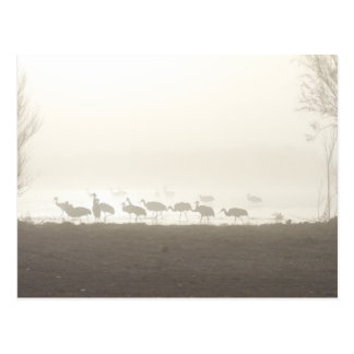 Cranes in the mist postcard