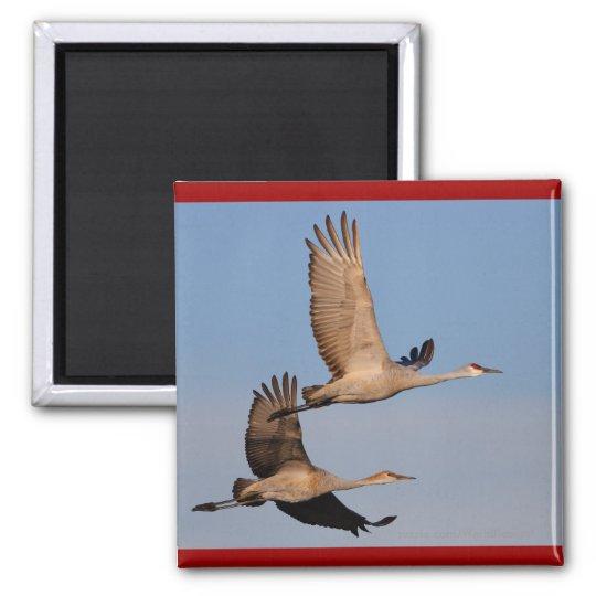 Cranes Magnet