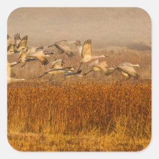 Cranes over golden field square sticker