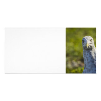 Cranky Old Seagull (Add Your Own Text) Photo Cards