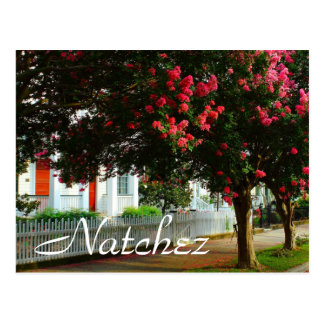 Crape Myrtle, Summer in Natchez, MS Postcard