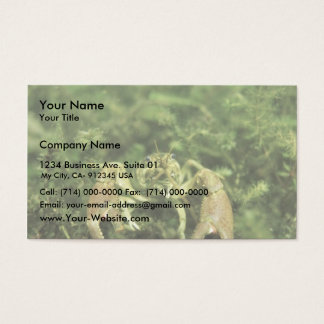 Crayfish- close-up underwater business card