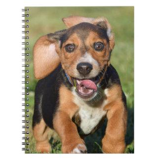 Crazy Beagle Puppy Running Notebooks