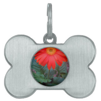 Crazy Daisy Pet ID Tag