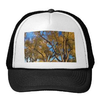 Crazy Golden Tree Sky Mesh Hats