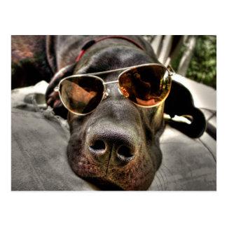 Crazy, Lazy Loungin' Dog Postcard