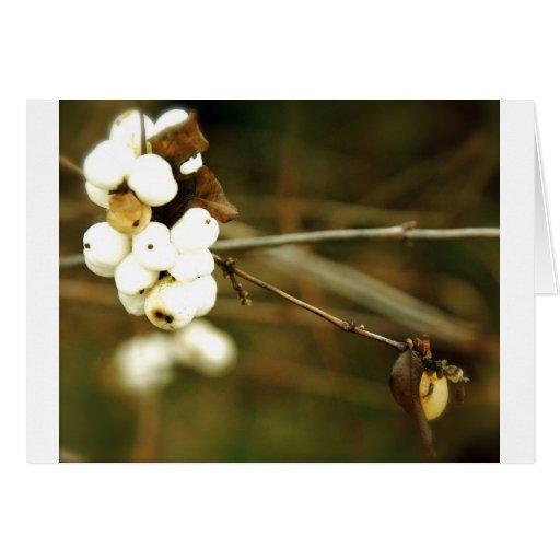 Cream Berries Card
