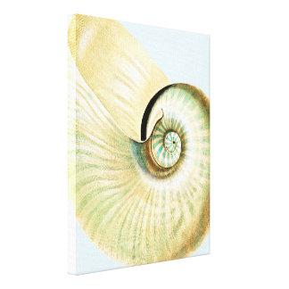 Cream Blue Beach Sea Shell Canvas Print