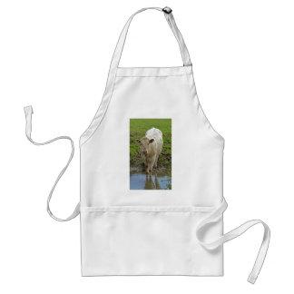 cream bull in water apron