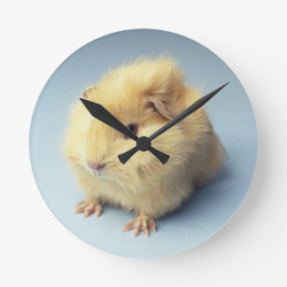 Cream colored Guinea pig Wallclocks