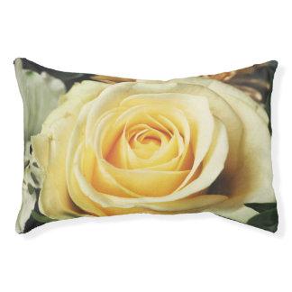 Cream Colored Rose