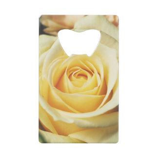 Cream Colored Rose Photograph