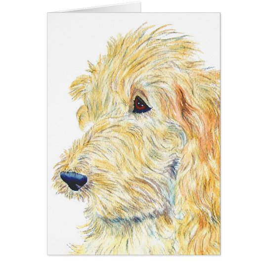 Cream Labradoodle #2 Greeting Card